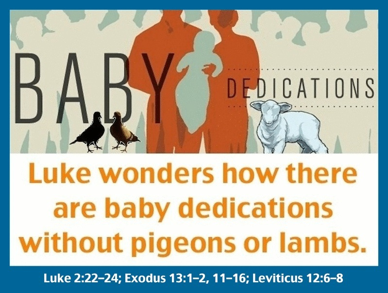 BabyDedications_pigeons_lamb